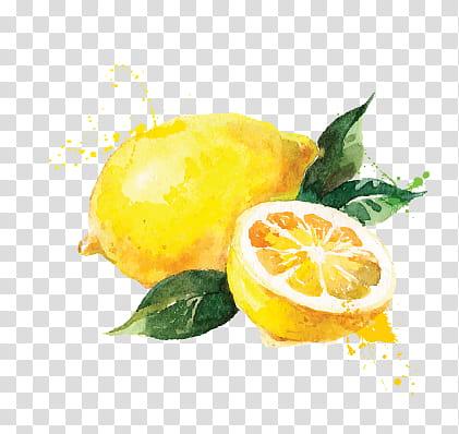 clip library Fruits background png clipart. Transparent lemon illustration