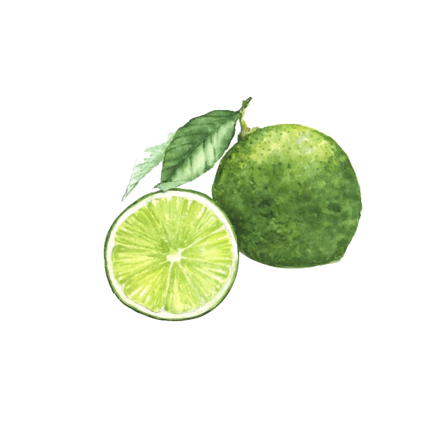 clipart library Watercolor painting Lemon Lime Photography