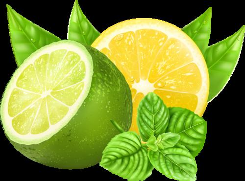 svg black and white stock Citrons botanique pinterest havana. Lemons clipart citron.