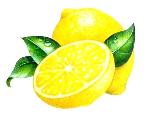 clip art library download Lemon Drawing