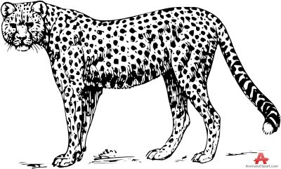 image library Leopard clipart black and white. Free cliparts download clip.