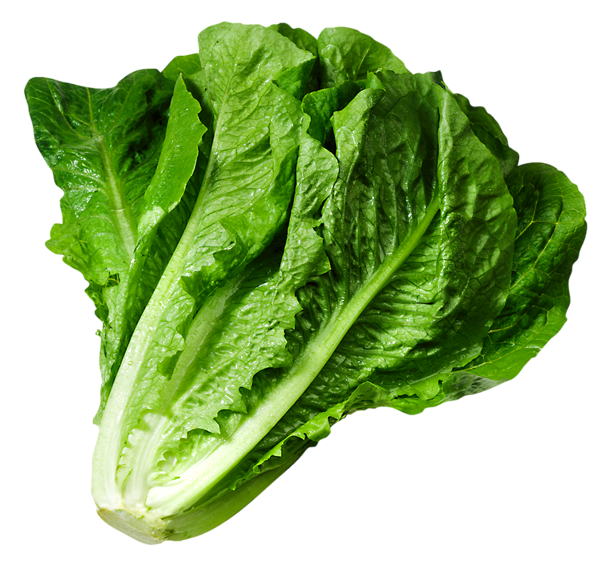 svg royalty free download Broccoli clipart lettuce. Png picture gy m.