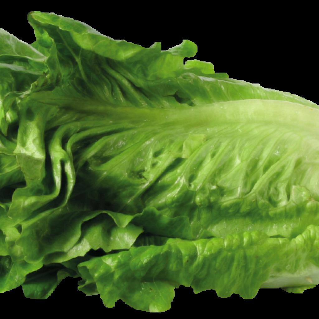 clip free Lettuce clipart. Hatenylo com clip art.