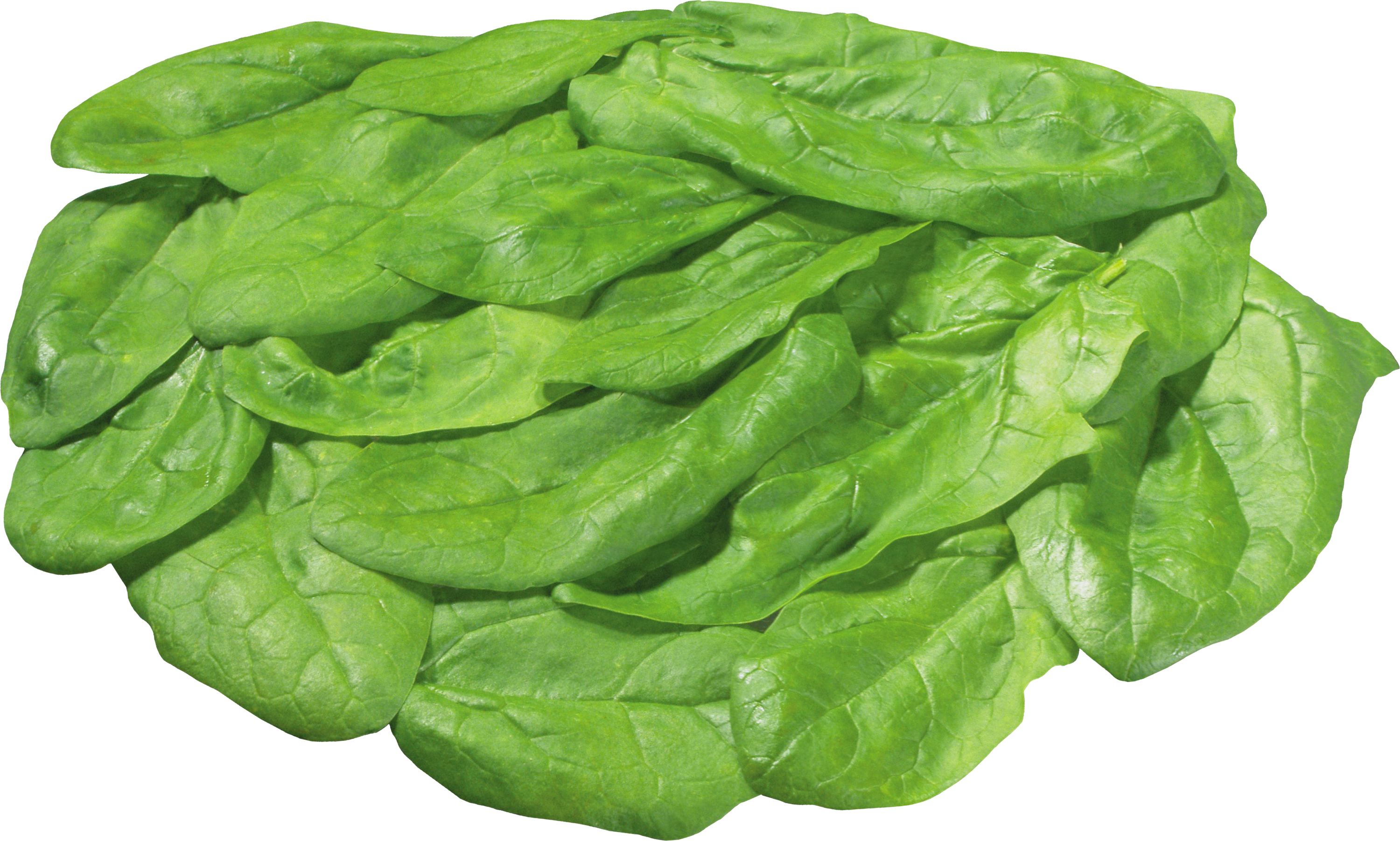clip free stock Transparent background free on. Lettuce clipart head lettuce.