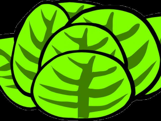 svg transparent download Lettuce clipart head lettuce. Free on dumielauxepices net.