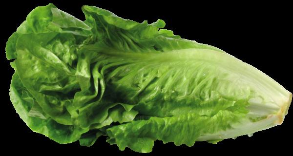 svg free Lettuce clipart lettuce tomato. Pin by lori molnar.