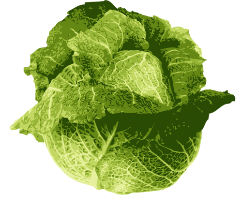 svg free download Lettuce clipart vintage. Pin by courtney patterson.