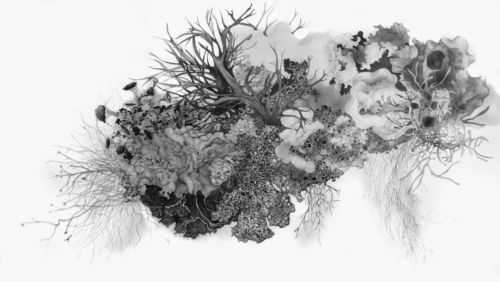 clip freeuse download Lichen drawing black and white.  easy for free