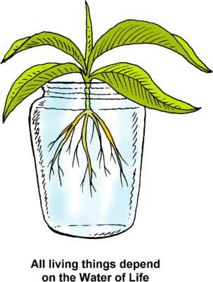 png transparent stock Life clipart. Image hydroponics all living