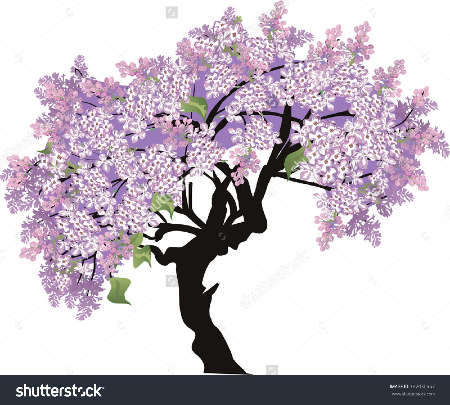 clipart library download Lilac Tree Stock Photos