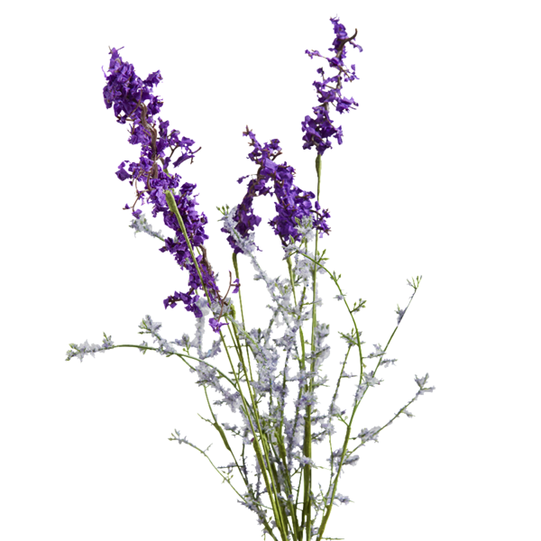 vector library stock Collection of free Lavender drawing