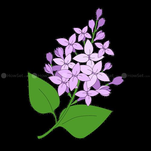 clip art royalty free Lilacs Drawing at GetDrawings