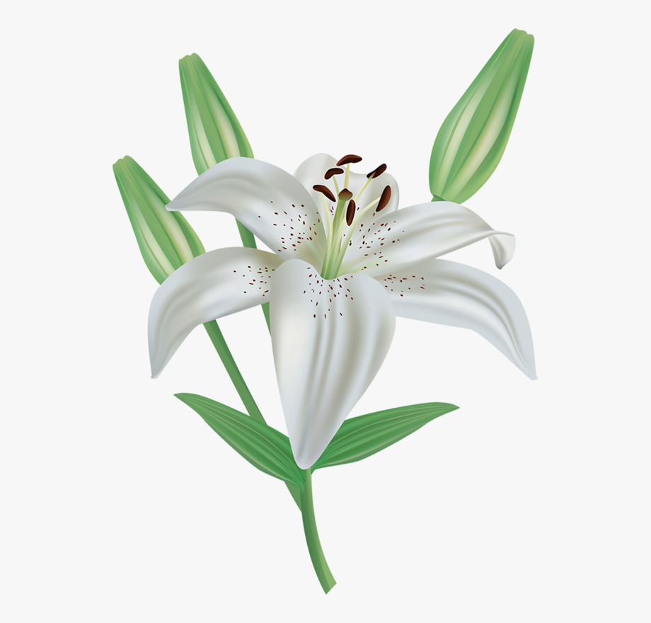 banner black and white library  clip art flowers. Lilies clipart.