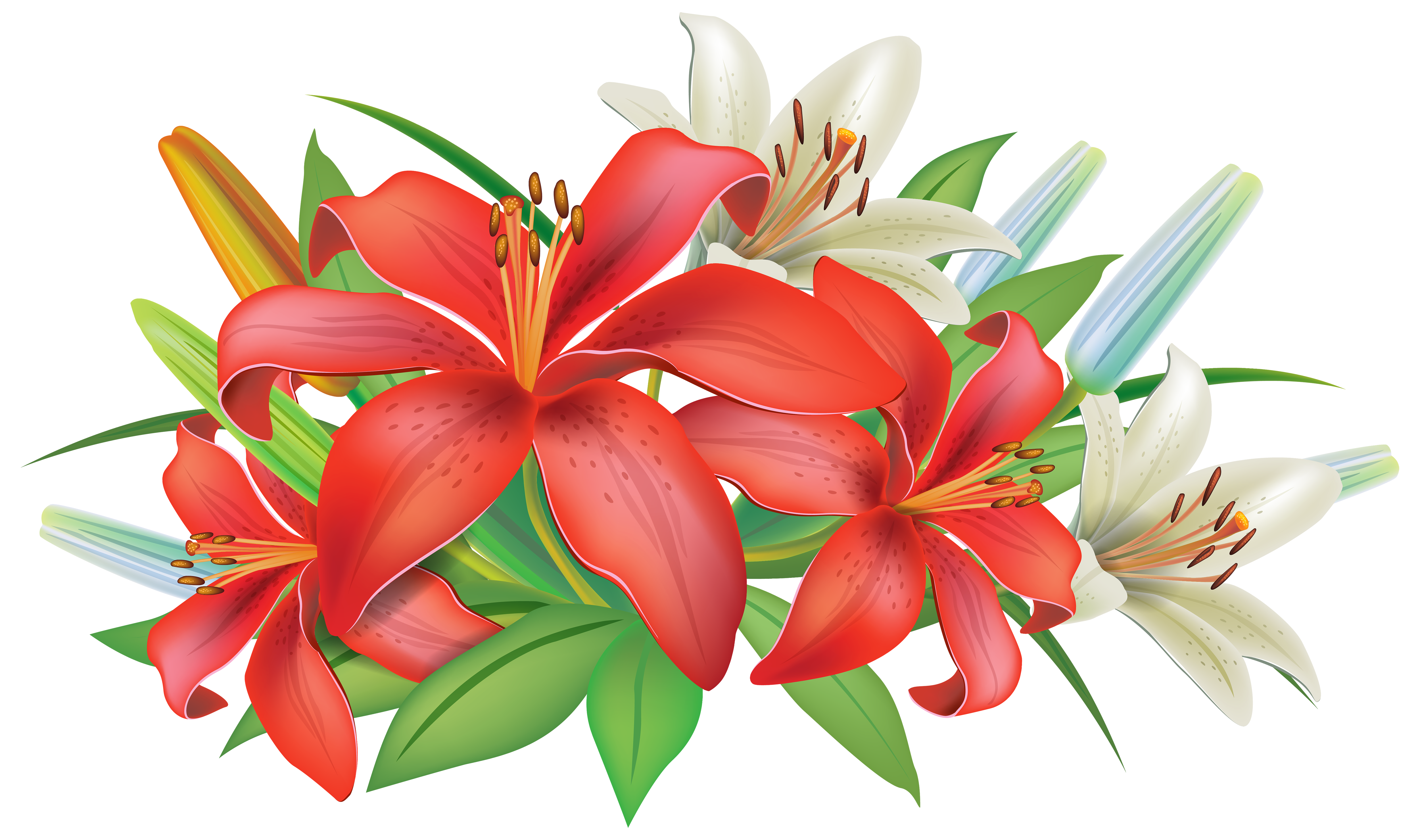 clip art free library Lily clipart lily name. Red lilies flowers decoration.