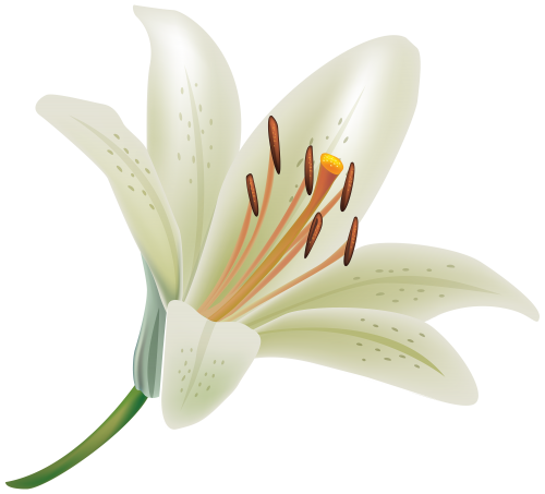 png Lilies clipart. White lily flower png.