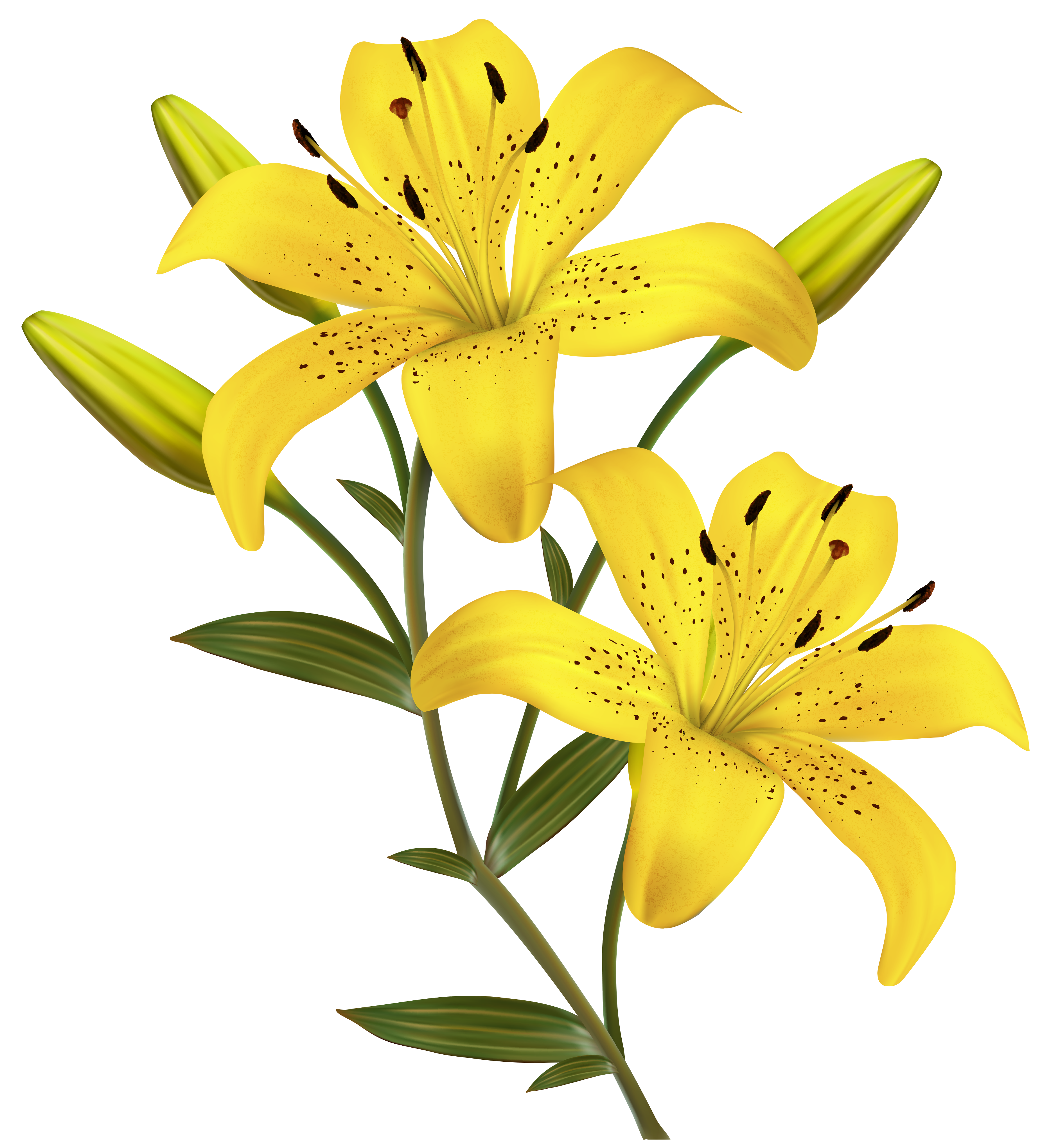 png free stock Lilies clipart. Yellow png image gallery.