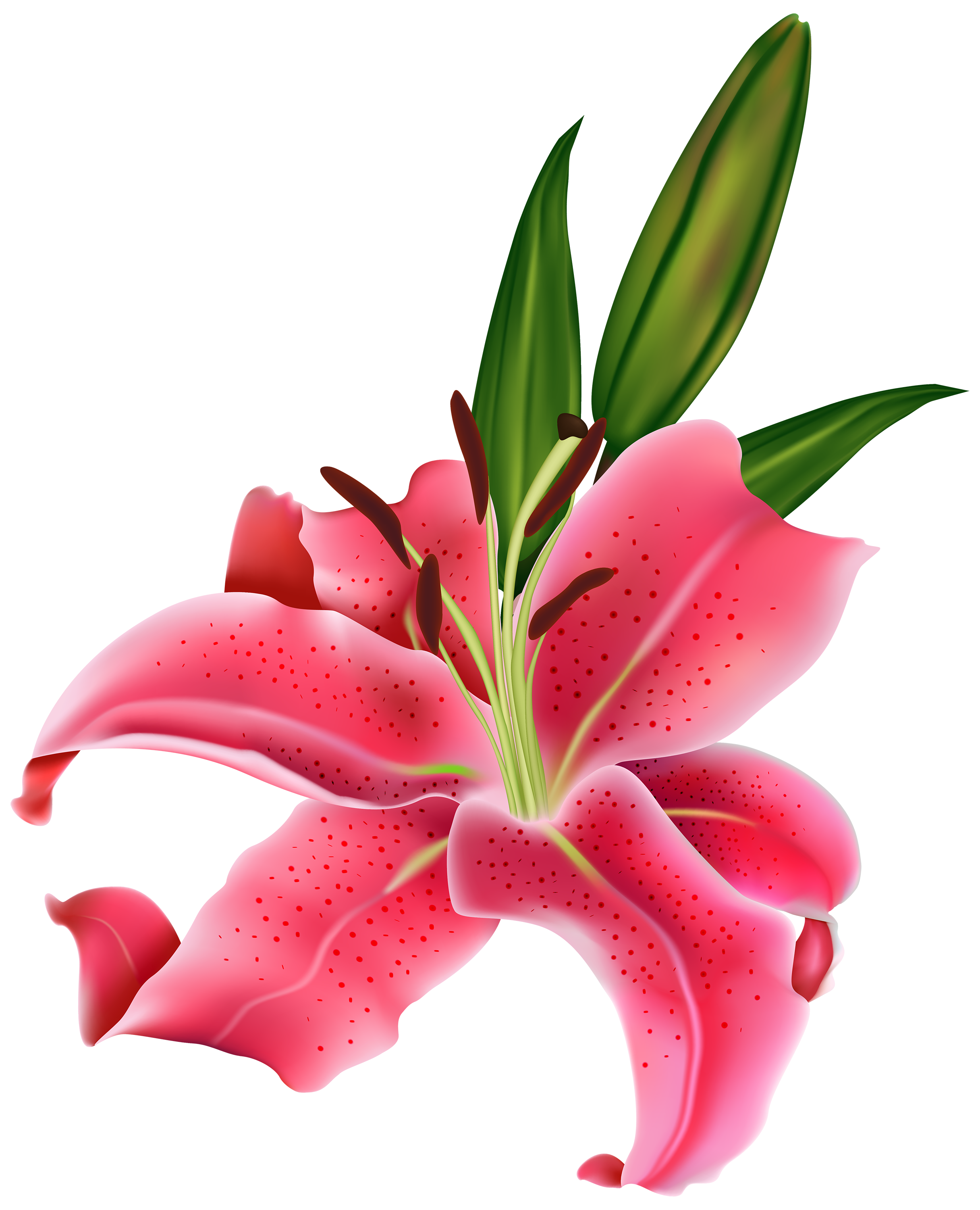 clipart freeuse download Pink lilies clipart flores. Amaryllis drawing stargazer lily