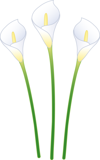 free download Lilies clipart canna lily. Three white calla free.