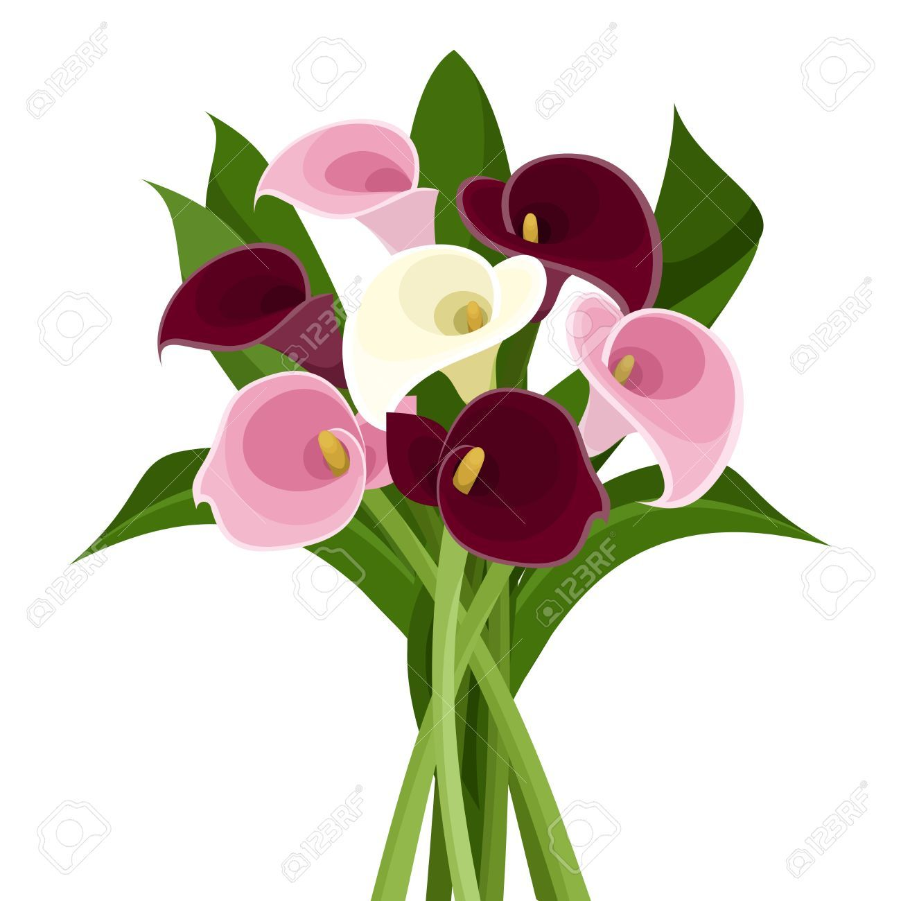 banner transparent stock Lilies clipart canna lily. Image result for calla.