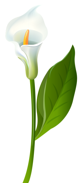 png library download Calla Lily Transparent PNG Clip Art Image