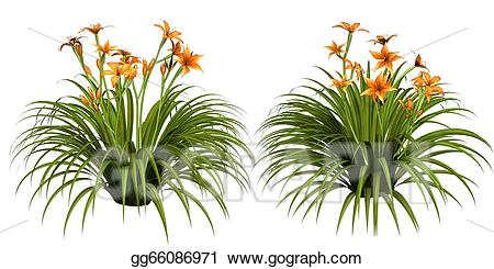 svg freeuse Lilies clipart daylily. Stock illustration day lily.