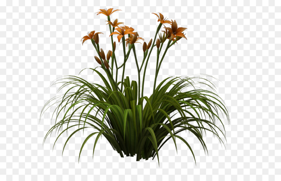 image black and white stock Lilies clipart daylily. Png free transparent images.