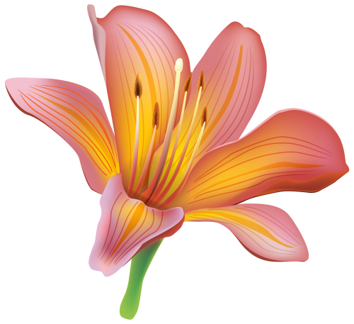 jpg download Lily flower png pinterest. Lilies clipart daylily.