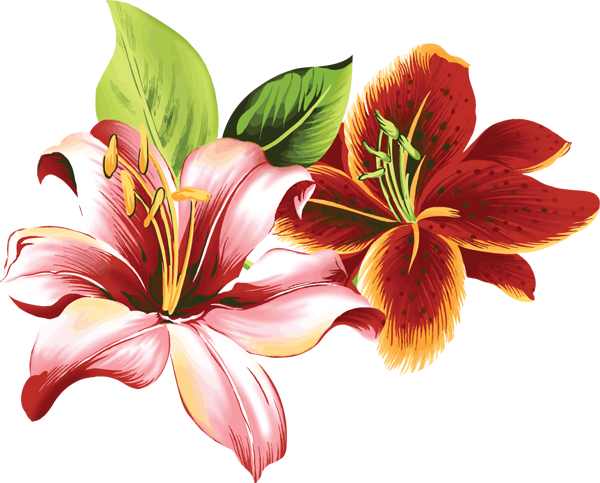 graphic black and white download Lilium flower floral design. Lilies clipart daylily.