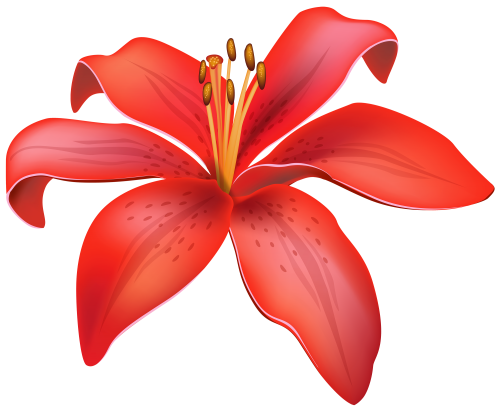 clip free stock Red lily flower png. Lilies clipart daylily.