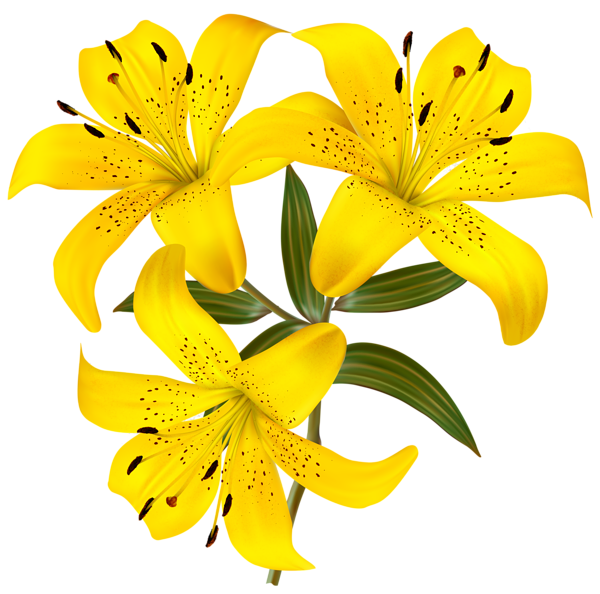 banner transparent download Lilies clipart daylily. Lily flower cluster free.