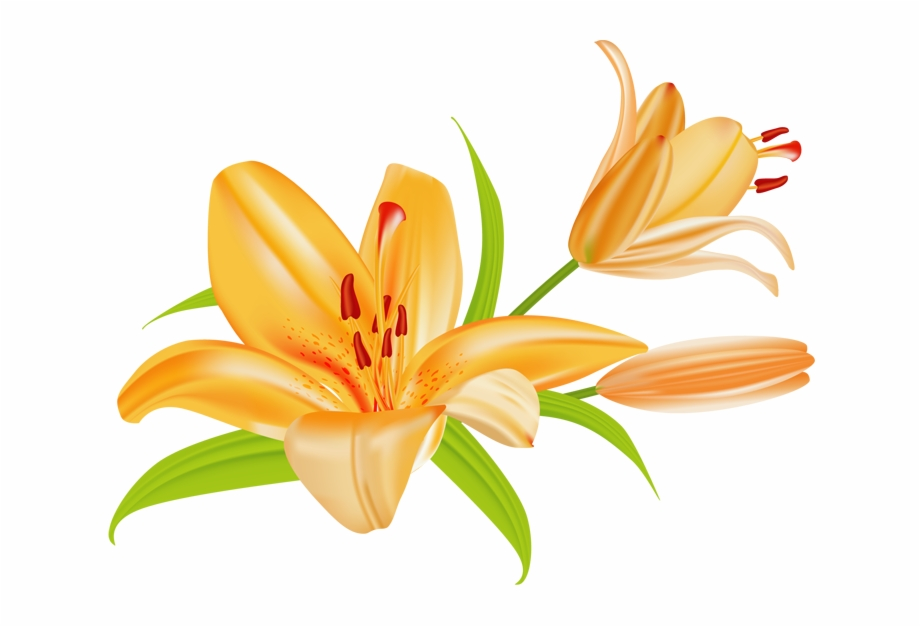 graphic freeuse Orange flower single day. Lilies clipart daylily.