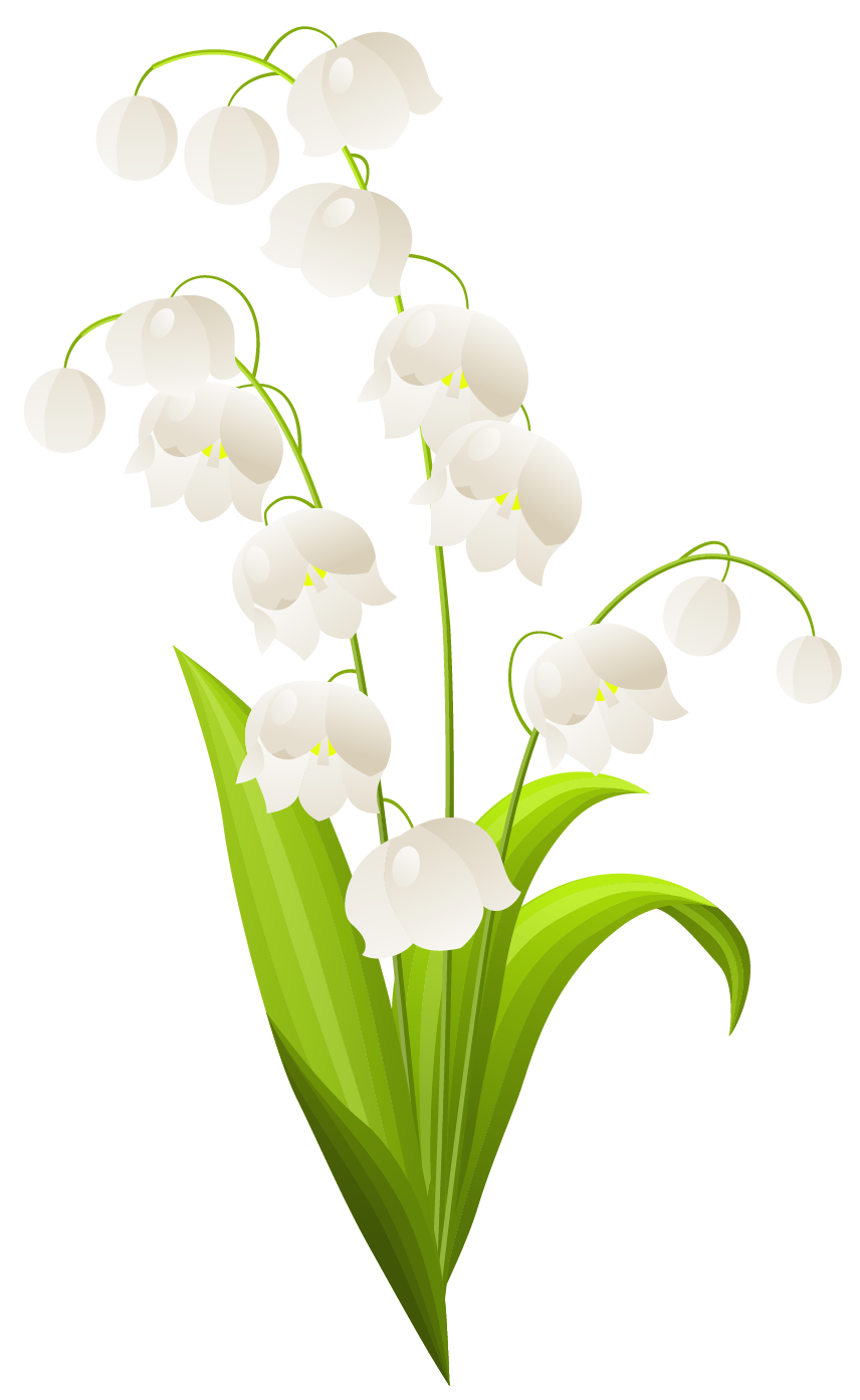 svg transparent Lily of the valley. Lilies clipart frame.