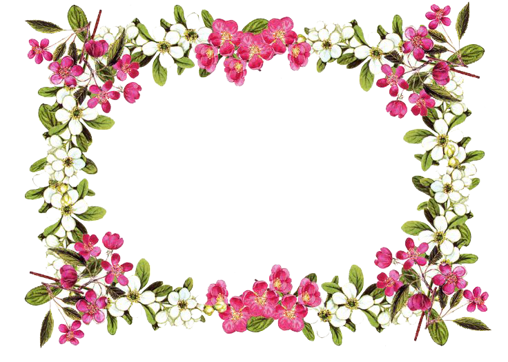 jpg library library Flowers borders png transparent. Lilies clipart frame.