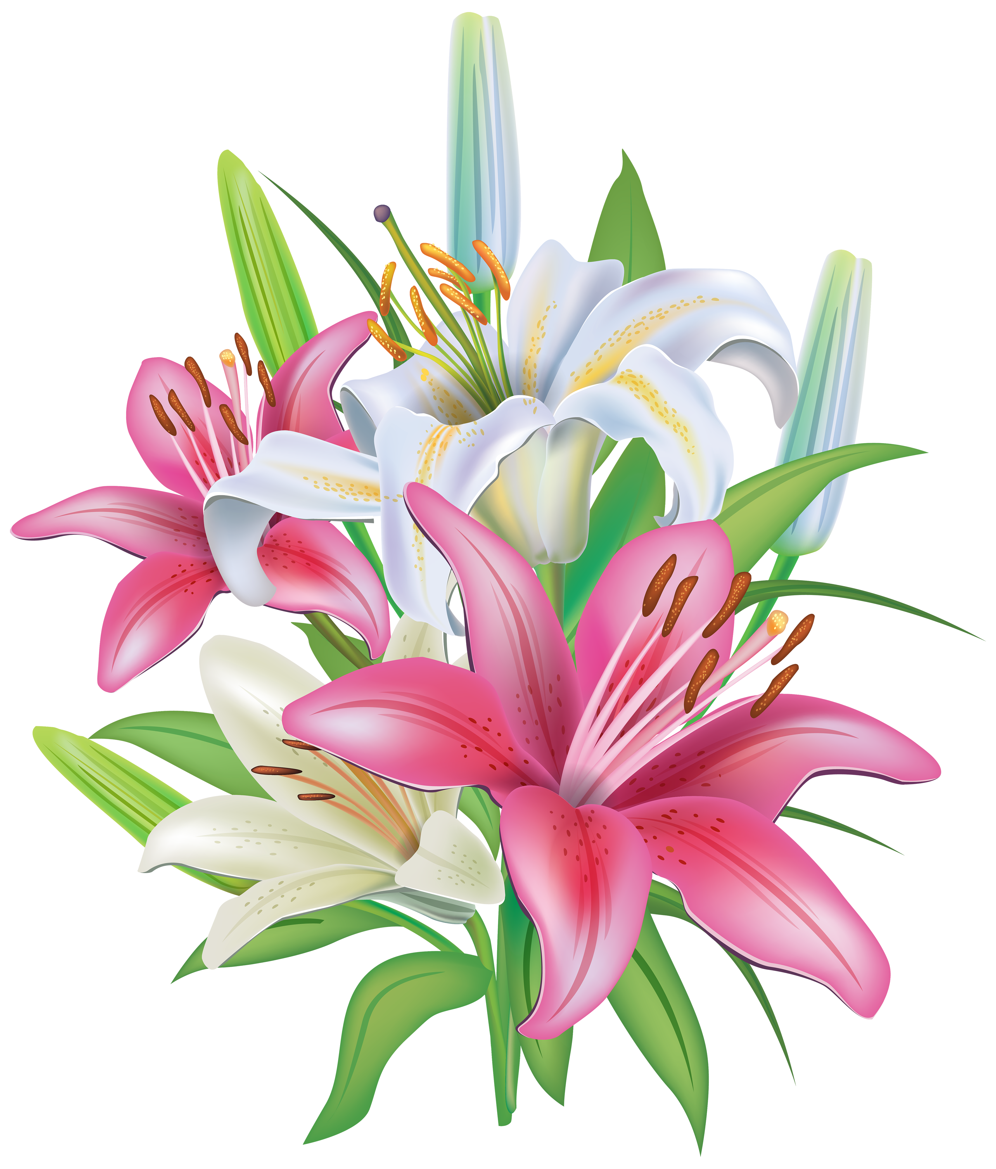 clip free library Lily clipart lily name. Pink lilies flores pinterest.