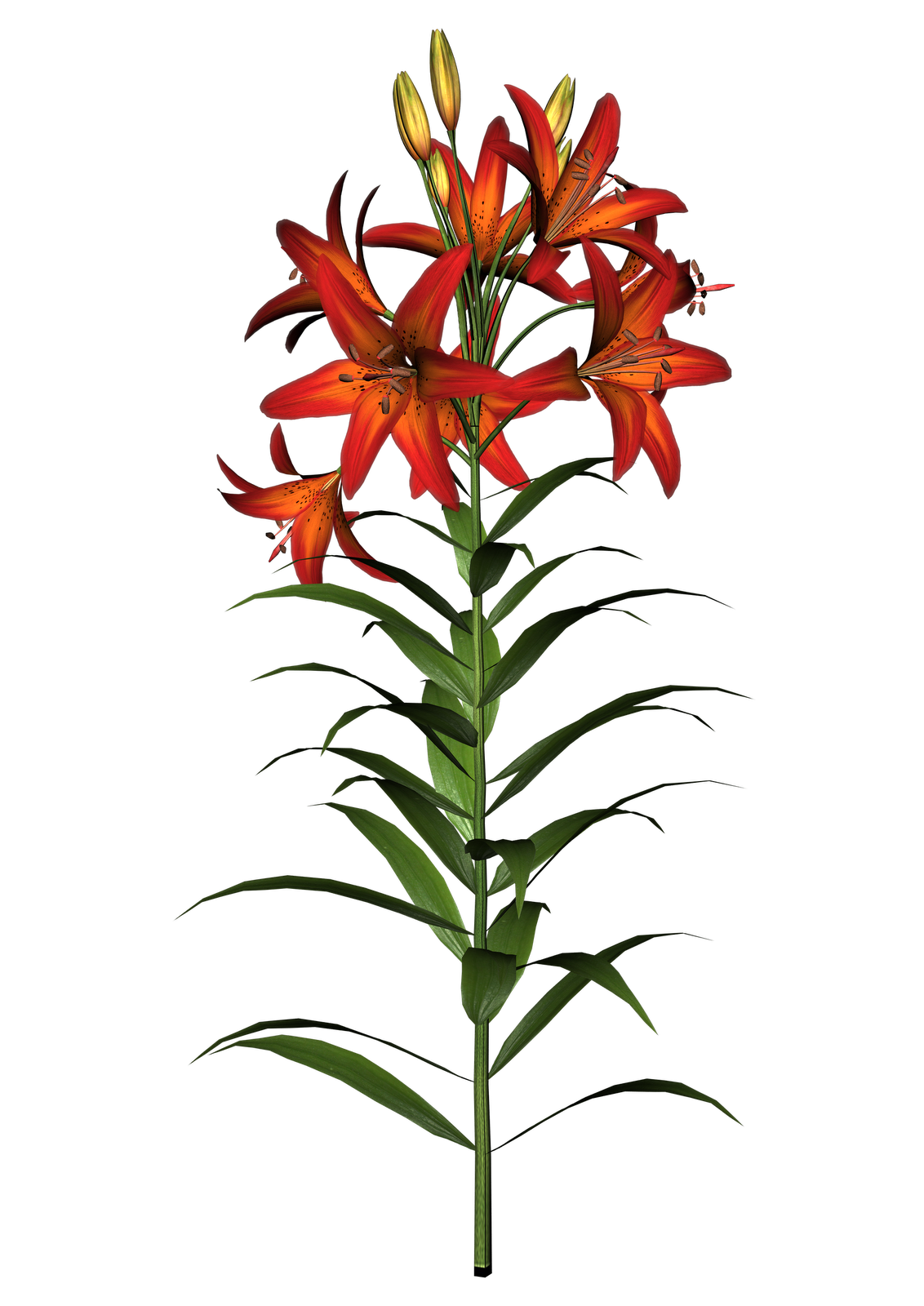 clipart royalty free download Lily Flowers Clipart at GetDrawings