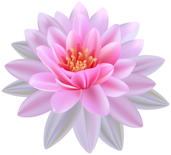 graphic freeuse library Pink water png image. Lily clipart pomegranate flower.