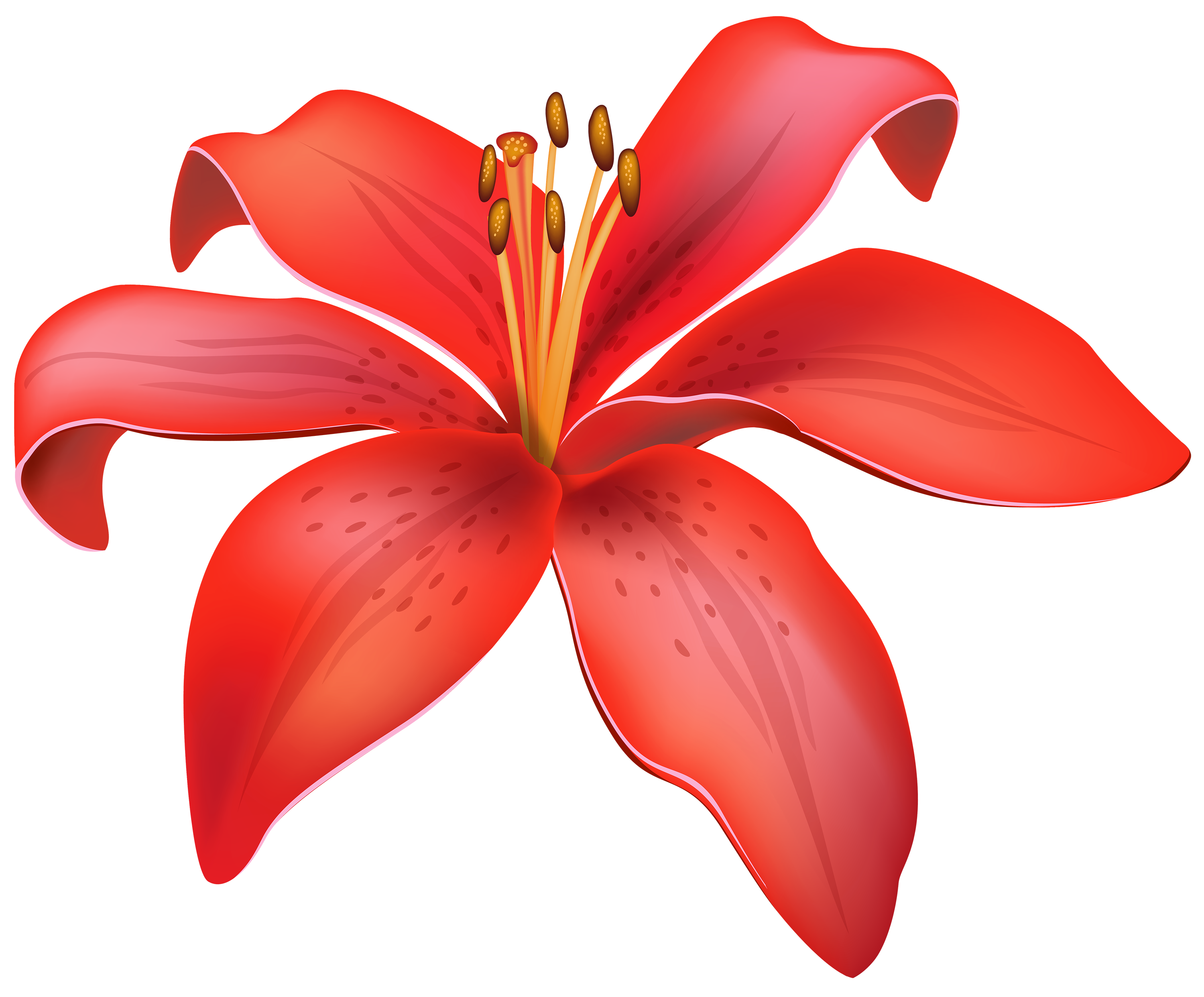 clip transparent Lily clipart. Red flower png best