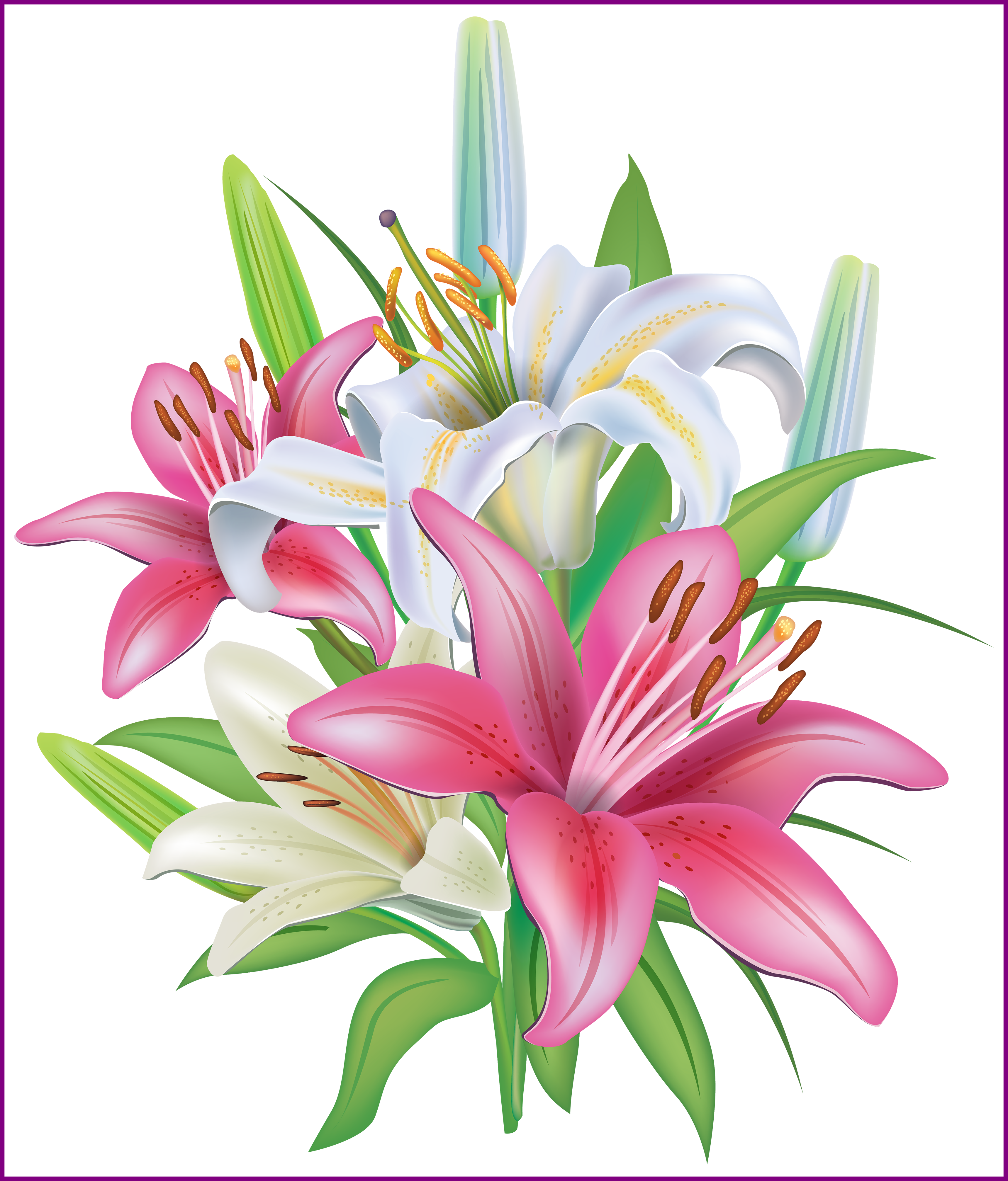 clip art transparent Stunning pink lilies flores. Lily clipart.