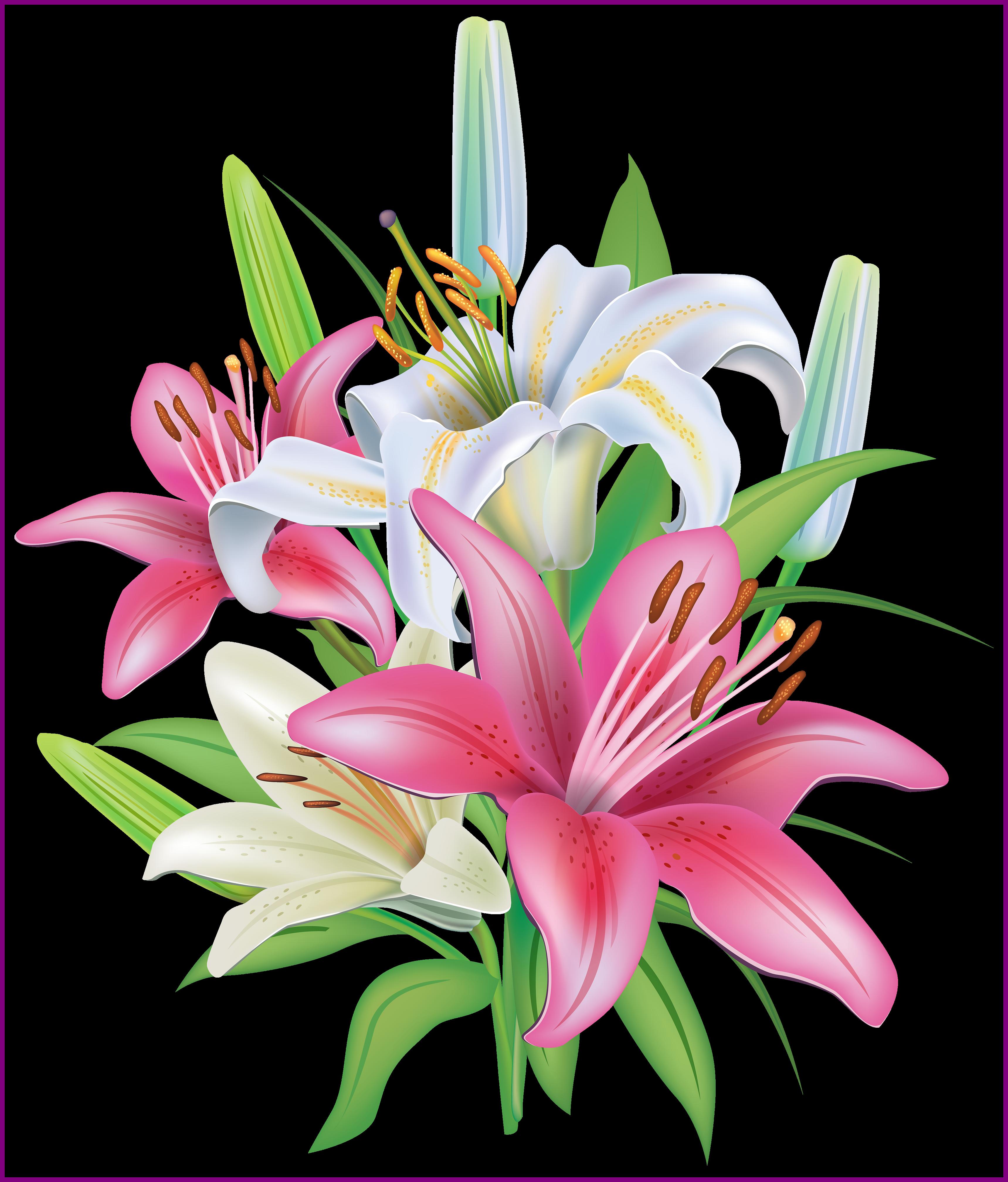 clip art transparent Lily clipart. Stunning pink lilies flores.