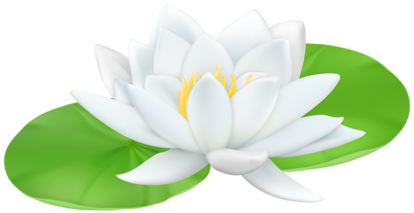 clipart free download Water transparent png clip. Lily clipart.