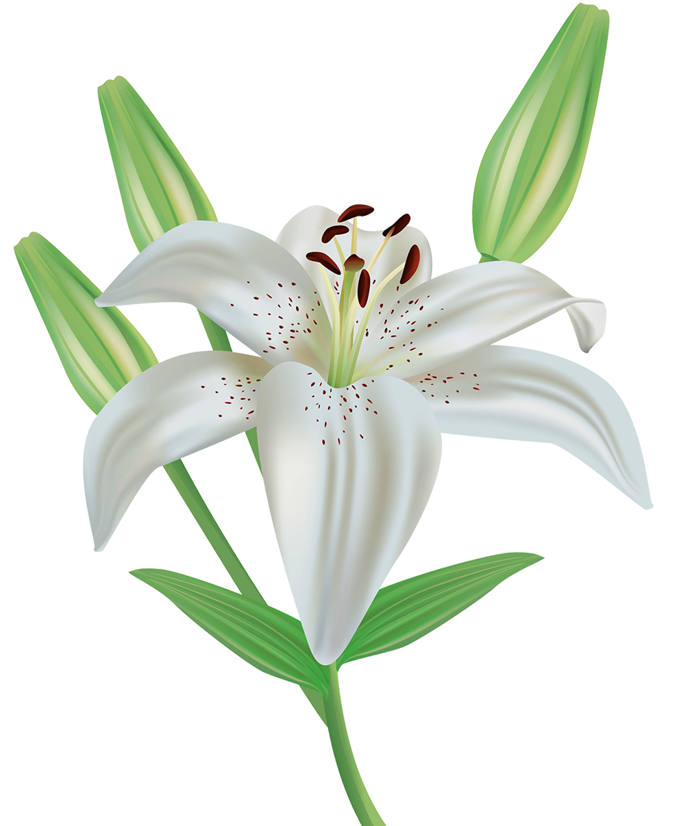 banner black and white library Flower png image gallery. Lily clipart lily name.