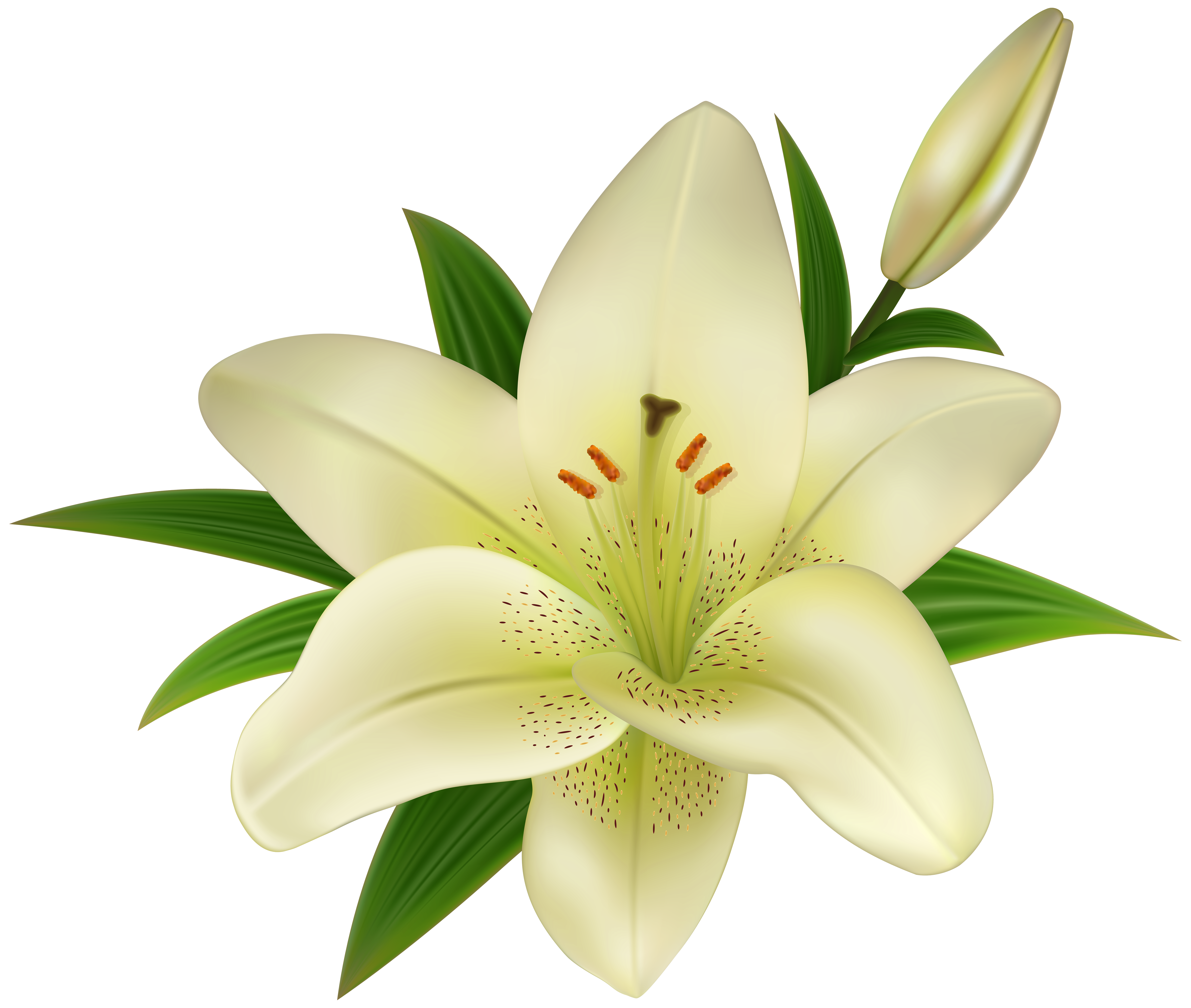 png freeuse download Lily clipart pomegranate flower. Lilium amaryllis belladonna clip.