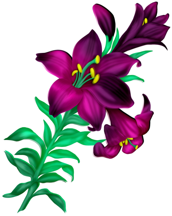 graphic black and white Lily clipart pomegranate flower.  flores flowers bloemen.