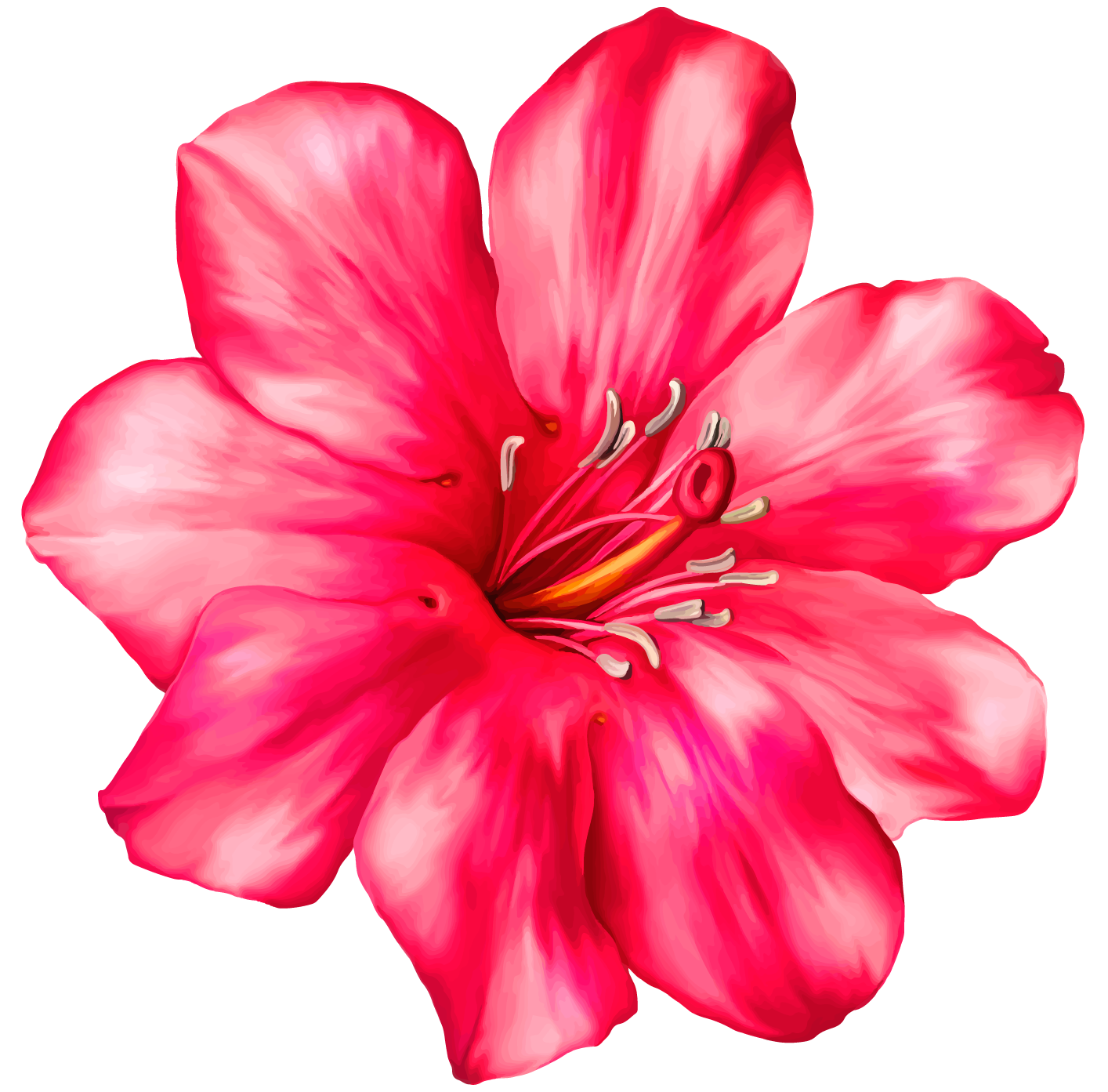 clipart library library Pink png clipart picture. Tropical drawing exotic flower