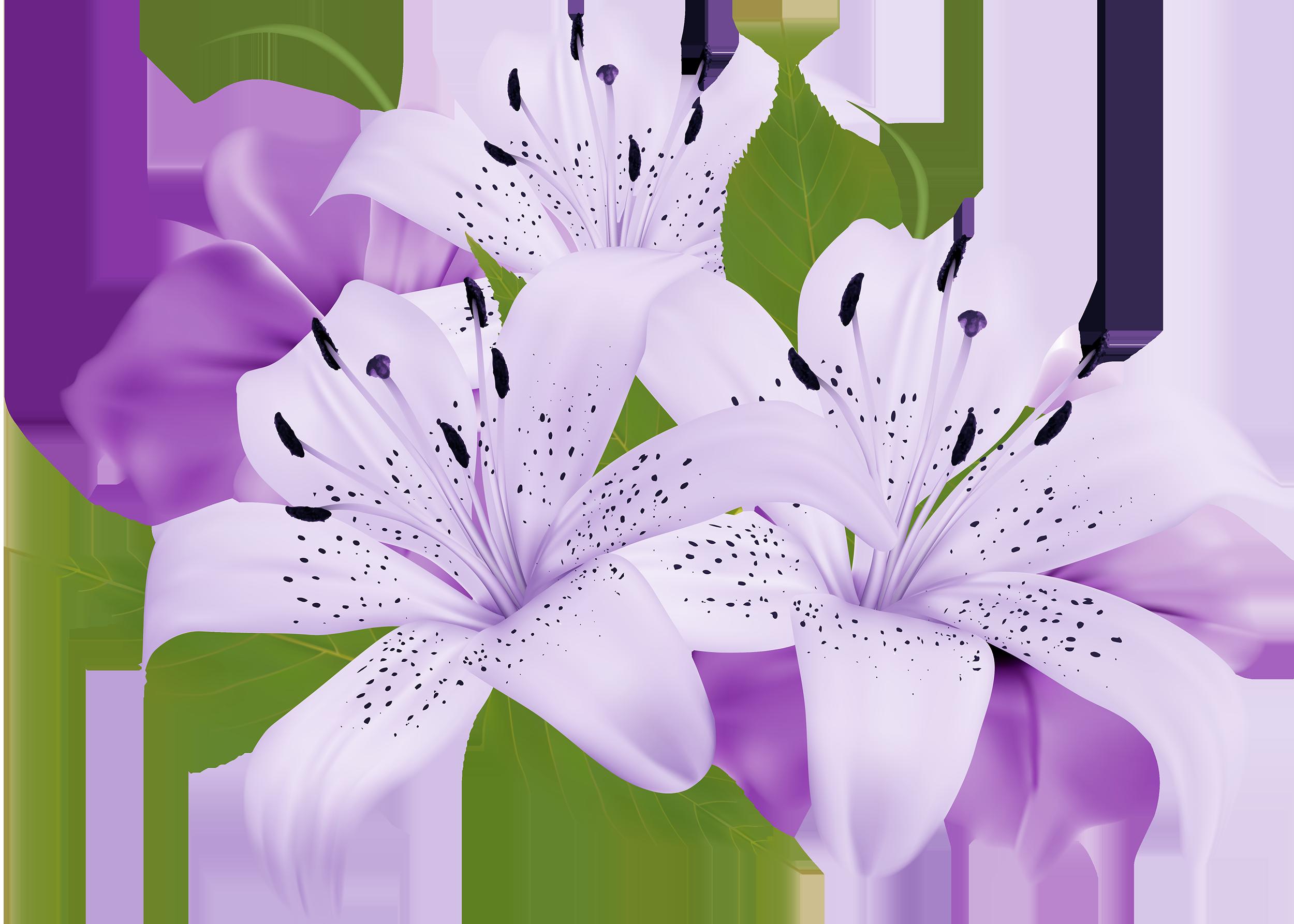 clip royalty free library Violet clipart violet flower. Purple decorative flowers png.