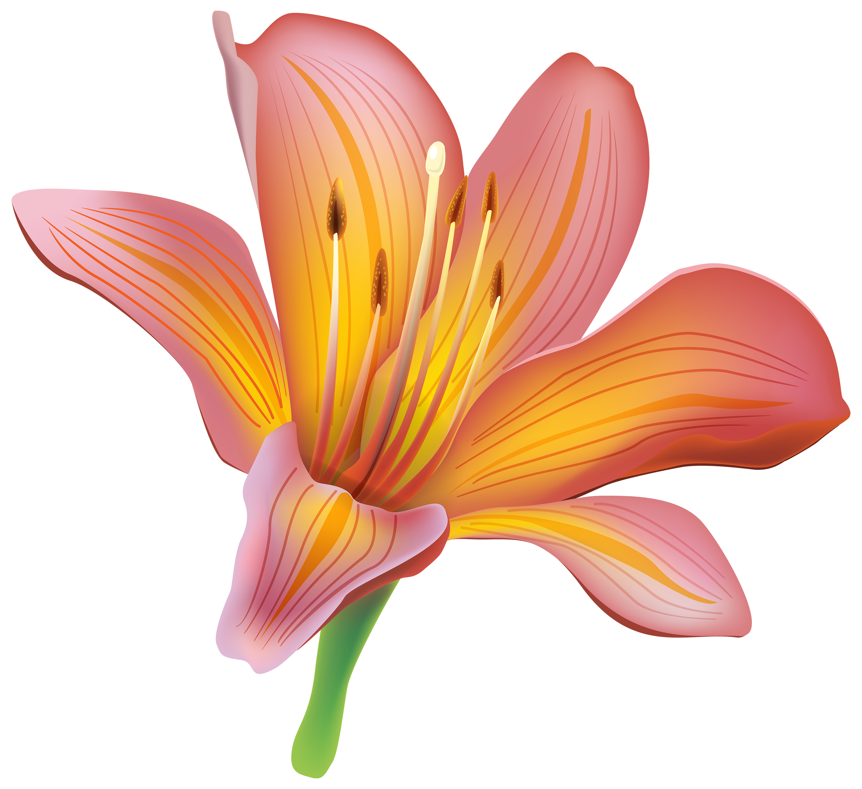 banner Flower png best web. Lily clipart.