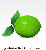 png stock Lime clipart. Clip art royalty free.