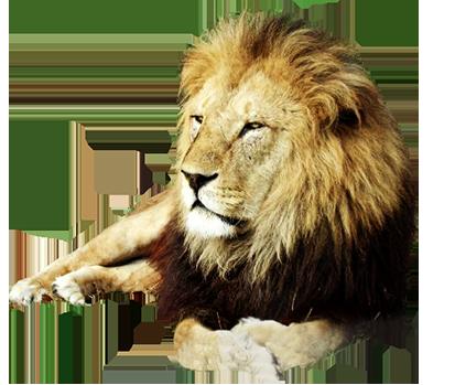 clip freeuse download Lions clipart monarch. Animal clip art resting