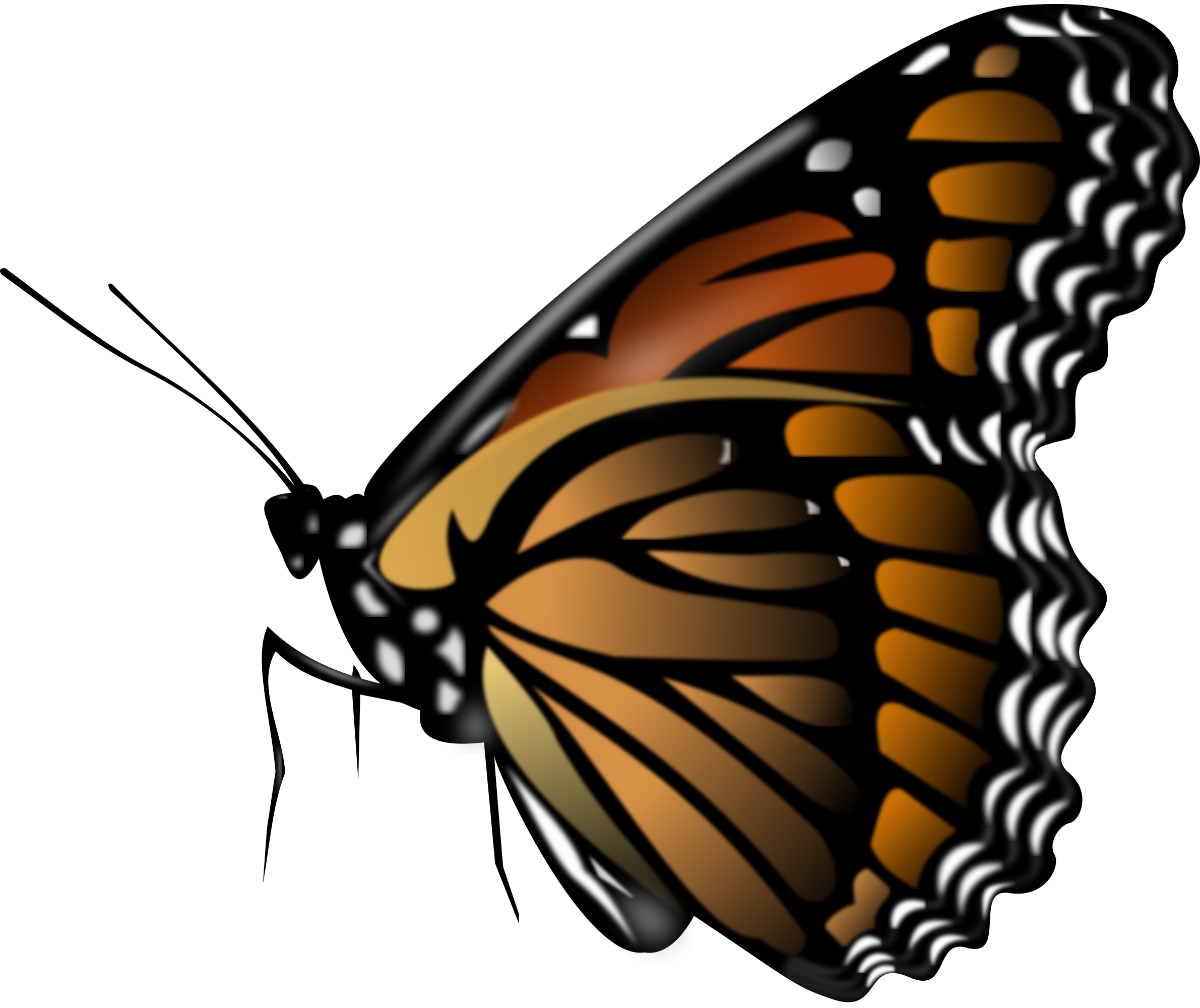 png black and white stock Butterfly row free on. Lions clipart monarch