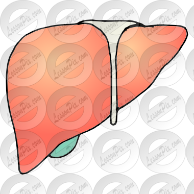 banner free download Liver clipart. Picture for classroom therapy